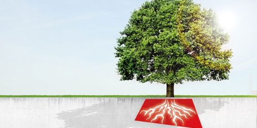 Baum mit roten Wurzeln die durch Beton reichen